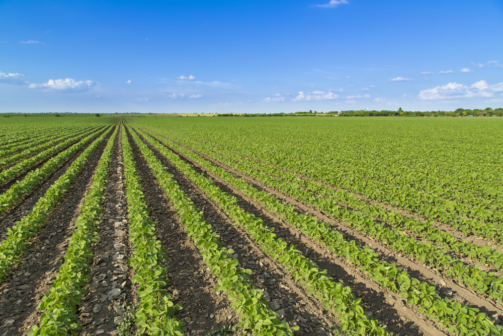Early Stress Boosts Soybean Yield