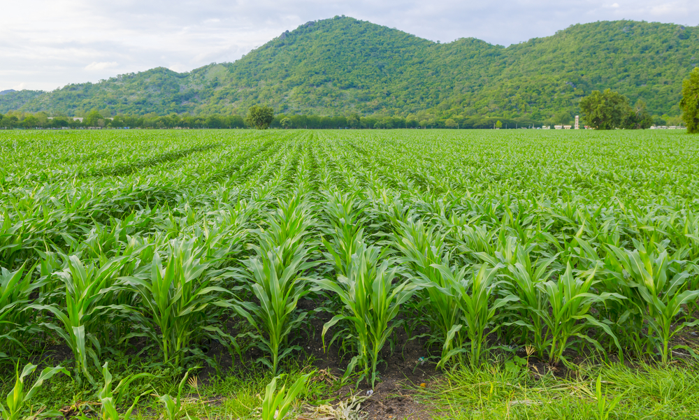 DuPont Collaborates with Sumitomo Chemical for Seed